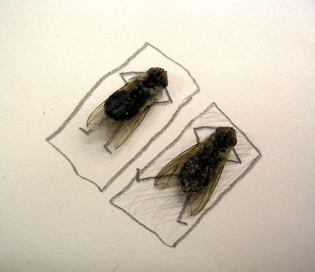 dead_flies_art_03